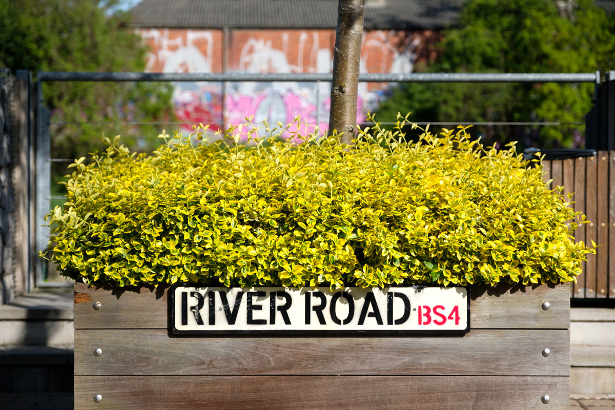 Bright leaves in planter with 'River Road' sign,